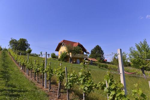 Pogled na celotno hiško iz vrta in vinograda